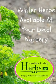 Winter Herbs Available At Your Local Nursery