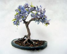 Blue Jacaranda Tree Bonsai Tree Seeds Grow Your Own 5 Seeds (4.99 USD) by CheapSeeds