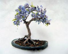 Blue Jacaranda Tree Bonsai Tree Seeds Grow Your Own von CheapSeeds