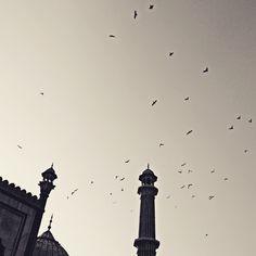 Freedom  #pigeons #photographie #pigeon #streetphotography #jamamasjid  #india #street_photograph #photographie #photographer #world_streets#canon #canon_official #canon50d #featureforcanon #canon_india #photo_storee #photooftheday #sunshine  #summers #delhidiaries  #delhi6 #delhi6streets #evening #flight  #minaret #minar #inspiredtraveller #_soi #minimalism #muslim #muslims