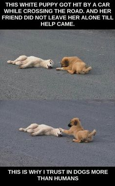 I trust dogs