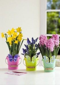 $15 for $30 to Spend this Mother's Day at ProPlants.com proplants promo code