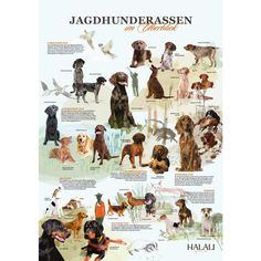 Das HALALI-Poster Jagdhunderassen im Überblick – Poster – Hobby Sport Hunting Dogs, Deer Hunting, Amazing Gardens, Beautiful Gardens, Deer Processing, Outdoor Venues, At A Glance, Drawing Reference, Under The Sea