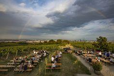 Die schönsten Gastgärten in Wien – Teil 1   1000things Summer Travel, Dolores Park, Falstaff, Vienna, Wine List, Air Fresh, Road Trip Destinations, Travel Advice, Lawn And Garden