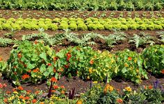 Growing veggies and flowers in the same beds can boost your yield and keep your crops healthy—here are 5 tips to get you started.