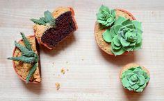 succulent cupcakes.