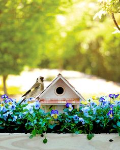 We're already planning our weekend DIYs, and are thinking of starting this birdhouse planter. Once Spring arrives, all we'll have to do is fill it with soil and flowers. The full instructions are over at Home Depot Garden Club. Beautiful Birds, Beautiful Gardens, Vogel Gif, Bird House Feeder, Picture Frames Online, Garden Club, Garden Path, Beautiful Morning, Simple Pleasures