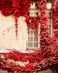 Autumn Paris Window