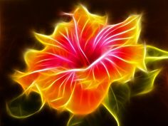 """""""Flaming"""" Hibiscus -- I love this!"""