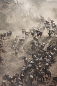 Spectacular shots of a river crossing during #migration months, from one of our recent guests at Elephant Pepper Camp (Photo credit: Stefan Menzi)