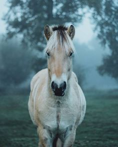 Few people do photography of animals better than @livingitrural. This is one of my very favorites! Tag a horse lover below! #liveauthentic #livefolk @folkmagazine