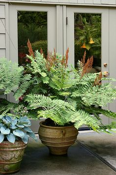 Fern looks so tropical in a container