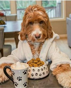Its Labor Day Dogs 2019 comon in and check out these cute photots and gifs. To celebrate we give you 47 Photos of some adorable dogs and puppies. Cute Funny Animals, Funny Animal Pictures, Dog Pictures, Dog Photos, Cute Puppies, Dogs And Puppies, Doodle Dog, Goldendoodles, Labradoodles