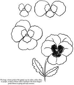 Pansy Drawing | plants draw an apple draw a daffodil draw a leaf