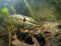 British Waters Compact Category: Pike Patrol By Mark Launchbury, UK