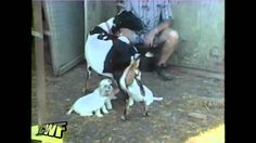 500 Goats, Hilarious, Puppies, Animals, Animaux, Animal, Laughing So Hard, Animales, Puppys
