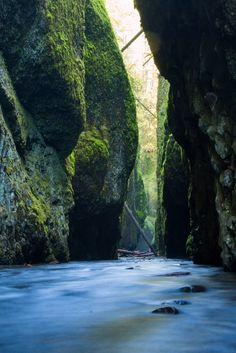 Wading through freezing water for this; Oneonta Gorge OR [OC] [35515326] #reddit