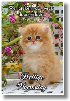 Good Morning, Wednesday, Cats, Animals, Buen Dia, Gatos, Animales, Bonjour, Animaux