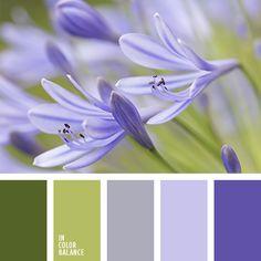 In color balance 1225 Fleurs bleues bleuet
