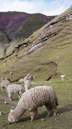 Rainbow Mountain Peru Vinicunca Adventure Hiking