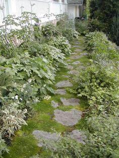 Rustic step-stones in moss pass between lush perennial plantings.