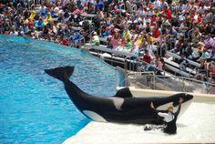 Judge Dismisses PETA's SeaWorld Slavery Suit #animalrights