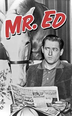 Mister Ed (TV Series (Mister Ed puhuva hevonen) Childhood Tv Shows, My Childhood Memories, Radio E Tv, Talking Horses, Mister Ed, Mejores Series Tv, Vintage Television, Old Shows, Great Tv Shows