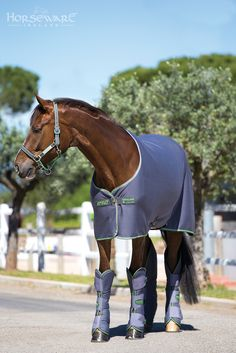 The Amigo Jersey cooler from Horseware for A/W15. Visit www.horseware.com to find your nearest stockist.