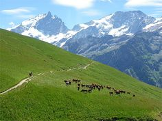 Pic de la Meije depuis Emparis Les Hautes-Alpes, c'est avant tout des villes à fort caractère : Gap la méditerranéenne, Briançon, la ville la plus haute de France, Embrun la médiévale… Et entre toutes ces villes, des vallées se déploient, toutes différentes et chacune avec ses secrets. Les Hautes-Alpes sont authentiques, et c'est en grande partie pour cela qu'on les aime.