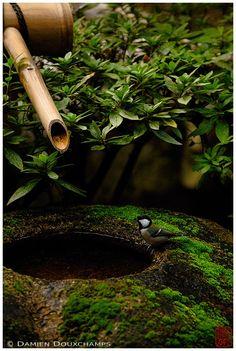 Damien Douxchamps' Photography - Untitled - _0037406