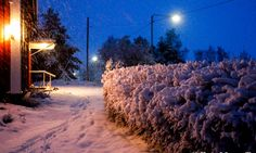 Niklas Falks Bilder, Sundom,Vasa m. 21st, Snow, Outdoor, Outdoors, Outdoor Games, Outdoor Living, Bud, Let It Snow