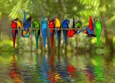 macaws in a line -