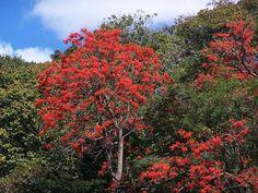 Mulungu - Brasil  Resultados da pesquisa de http://2.bp.blogspot.com/-GH0xhZJFeQo/Ts-658uIS6I/AAAAAAAAAuw/u-Rdo-tmQ6g/s1600/MULUNGU%2B6.jpg no Google