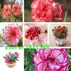 [Visit to Buy] 100seeds, 8 kinds of mixed wildflower ,Easy Care DIY Home Garden Choice,30Free Carnation Seeds ,Free Shipping #Advertisement