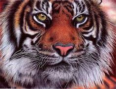 amazing ball point pen drawings - Google Search