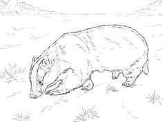 scientific drawing of european badger Free Bible Coloring Pages, Turtle Coloring Pages, Cars Coloring Pages, Printable Coloring Pages, Coloring Pages For Kids, Coloring Sheets, Coloring Books, Colouring, Penguin Pictures