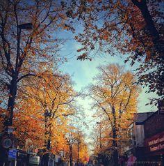 #Autumn, the year's last loveliest smile. #WilliamCullenBryant #memoriesframing . . . . . . . . . . . . #nature_brilliance #nature_perfection #fall #autumncolours #autumnseason #awesome_captures #beautifuldestination  #wildnessculture #autumntree #moodygrams #naturephotography #mystopover #treestagram #livingonearth #thegloblewanderer #nothingisordinary #nio_autumn #travelawsome #ic_natureshots #colourful