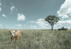 """""""WWF - World Wildlife Foundation"""" Artist: Andreas Smetana, Australia  Entry Description: """"The future is handmade"""" was the headline for this campaign. The images portray how our nature/wildlife will be manmade if we don't act now. http://www.photoawards.com (2009)"""