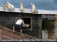 Awww, this is one of my favorites!  He saved the pups!!!