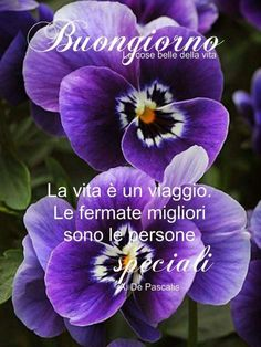 Good Morning Texts, Good Morning Gif, Italian Greetings, Morning Quotes Images, Italian Quotes, Summer Plants, Apple Logo, Day For Night, Instagram