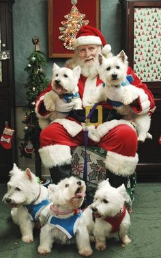 Westie on the right is thinking. Westies gone to visit Santa Christmas Animals, Christmas Dog, Merry Christmas, Father Christmas, Christmas 2017, White Christmas, Christmas Cards, Westies, Cute Puppies