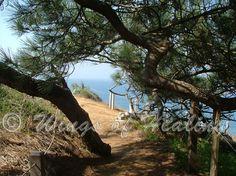 La Jolla trail