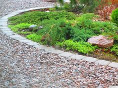istutus,kivetys,kivet,betoni,vihreä,kasvit,pihakasvit Stepping Stones, Terrace, Sidewalk, Home And Garden, Backyard Ideas, Outdoor Decor, Green, Gardening, House