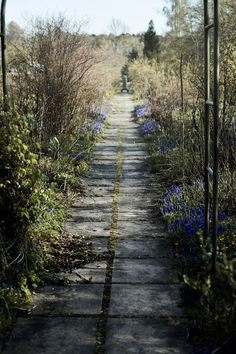 like this idea for flower garden walkway with moss growing in between