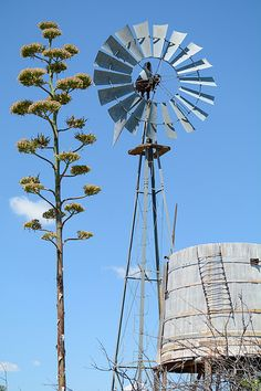 big-bend-country15.jpg   old windmill and cactus, Marathon, …   Flickr - Photo Sharing!