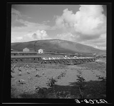 """Labor camp. The inscription on the mountain translated reads: """"P.R.R.A. New Deal"""" (Puerto Rico Resettlement Administration New Deal). Puerto Rico. Rosskam, Edwin, 1903-, photographer. LC-USF34-012508-E (b film nitrate neg.)."""