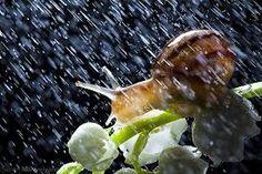 snails in the rain - Αναζήτηση Google