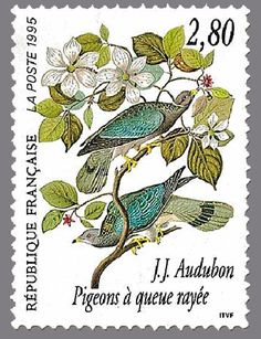 timbres de france/timbre france 1995 - 2930 - pigeons a queue rayee oiseaux audubon.JPG