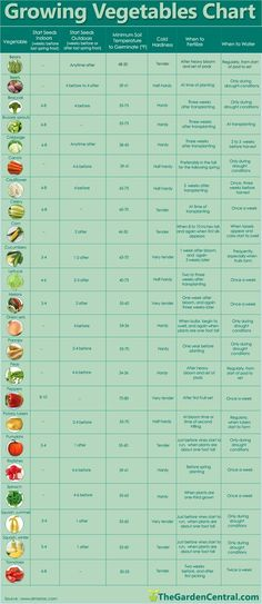 Growing Veggies Chart - a nice condensed guide to for when to start your seeds and plant care through the season.