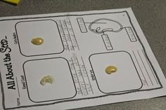 Soak a lima bean seed in water and let your students take it apart to learn about the parts of a seed!